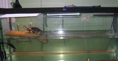 Water together with CO2 System in addition Canister Filter Turtle Tank ...